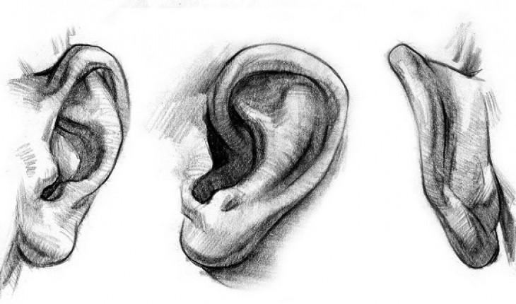 Ваши уши могут сказать больше о вашей личности, чем вы думаете