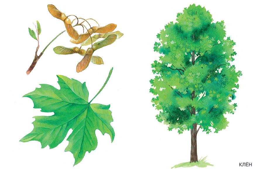 Картинки разных листьев