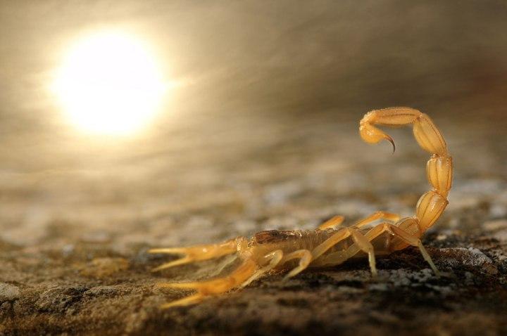 «Жало на солнце», Карлос Перес Наваль Лучшие фотографии дикой природы 2014 года