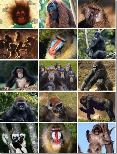 самые умные животные