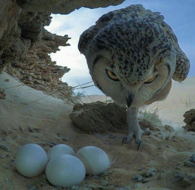 Животные в кадре