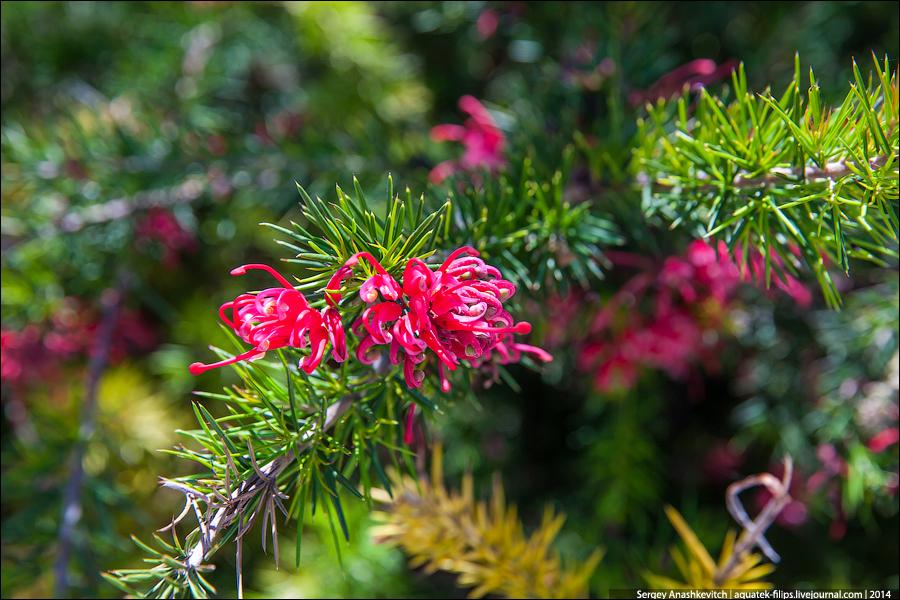 Вы видели цветущие елки??