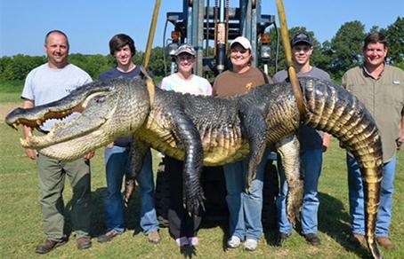 Крокодила весом более 300 кг поймали в Миссисипи