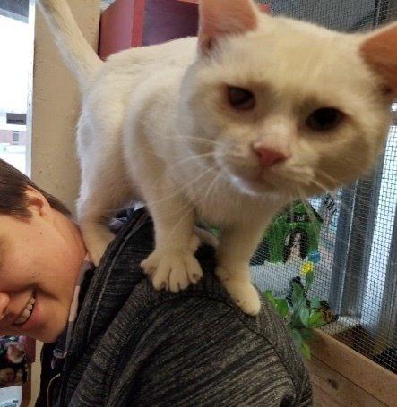 «Выбери меня!» Приютский кот…