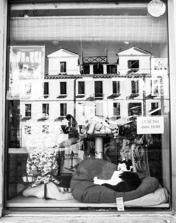14. Бицио в зоомагазине домашние животные, коты, кошка, кошка в магазине, кошки, фотопроект, черно-белая фотография, черно-белое фото