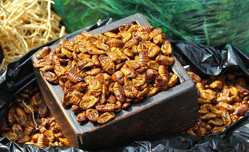 edible07 Фотогид по съедобным насекомым
