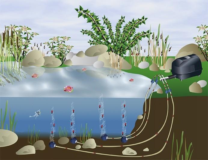Рыбу на Тропаревском пруду будут спасать с помощью аэрации