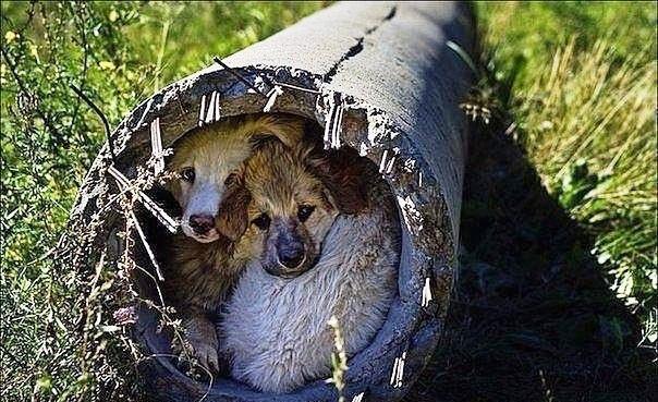 Не обижайте бездомных животных