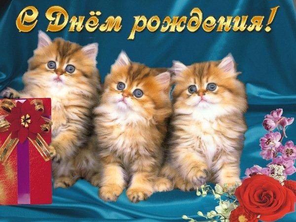Открытки с кошками поздравления с днем рождения 19