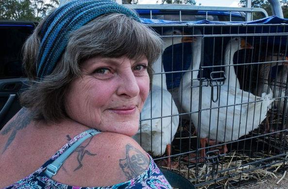 Пятеро гусей превратили жизнь австралийки в ад
