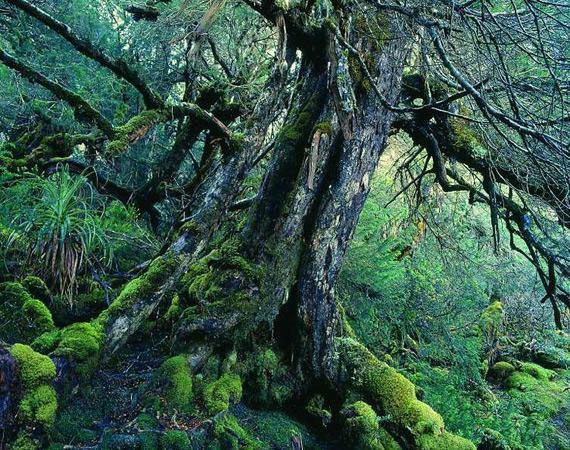 Старейшие формы жизни на Земле