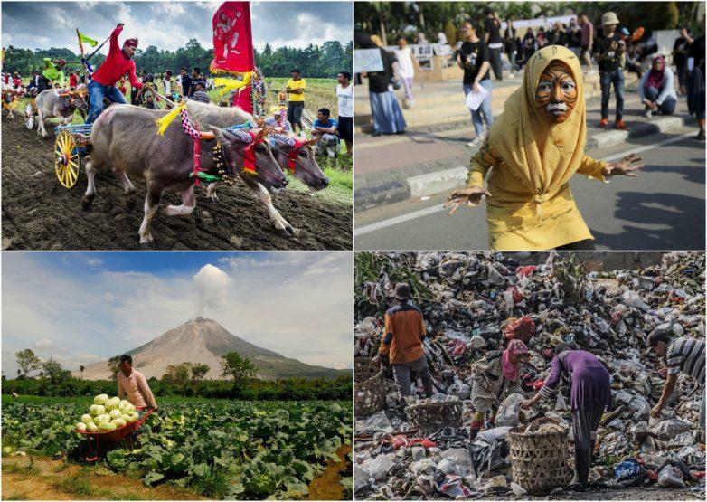 Странная, но обаятельная Индонезия