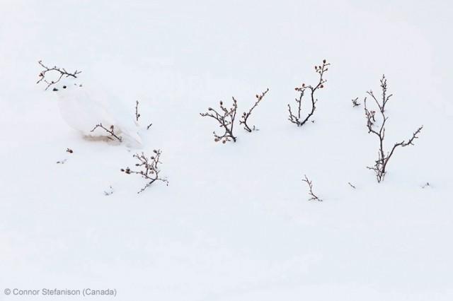 Забавные фото победителей конкурса Wildlife Photographer of the Year (6)