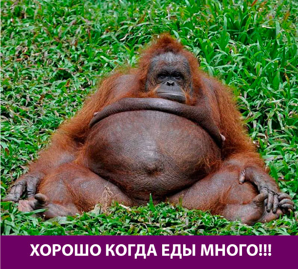 Большая толстая обезьяна