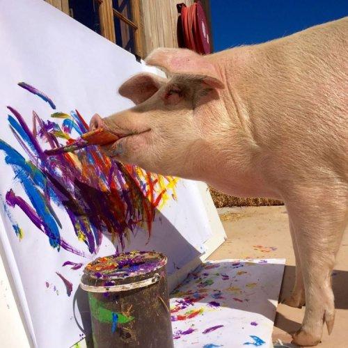 Свинка по кличке Пикассо рис…