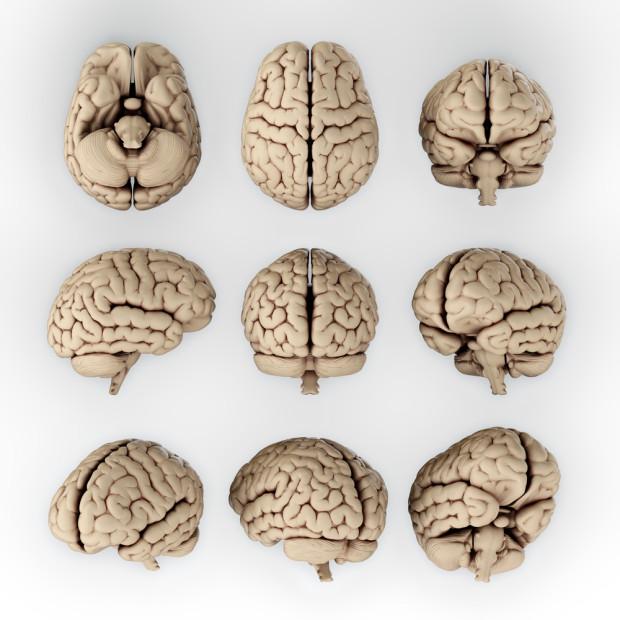 Нейробиолог о религии, геях, марихуане и абортах