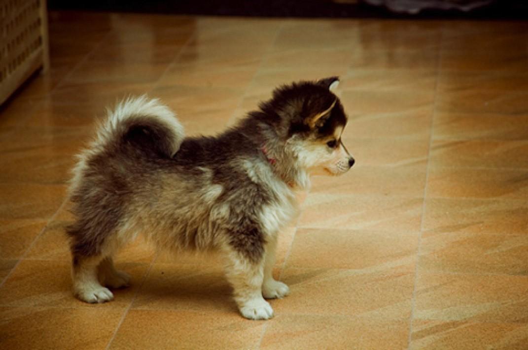 dogmixes09 Cамые необычные породы собак