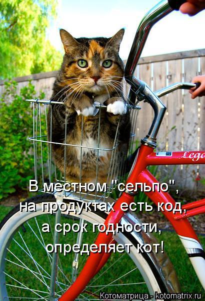 """Котоматрица: В местном """"сельпо"""", на продуктах есть код, а срок годности, определяет кот!"""