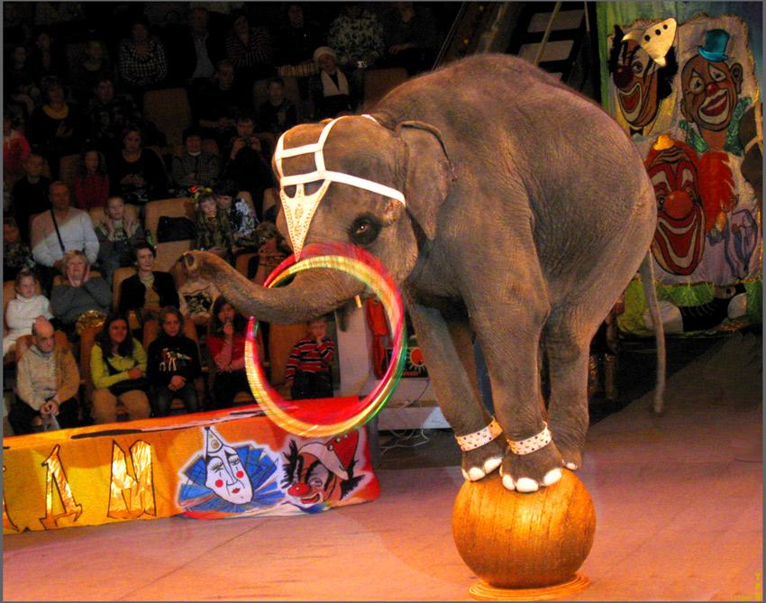 Цирк: жестокость под взрыв аплодисментов