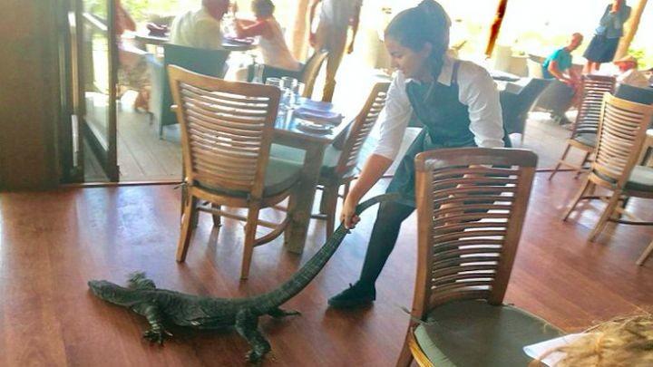 Смелая австралийская официантка вышвырнула варана из переполненного ресторана