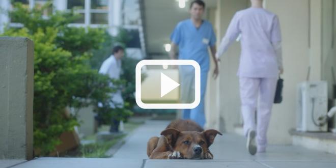 Умный пёс ждал своего хозяина у двери больницы