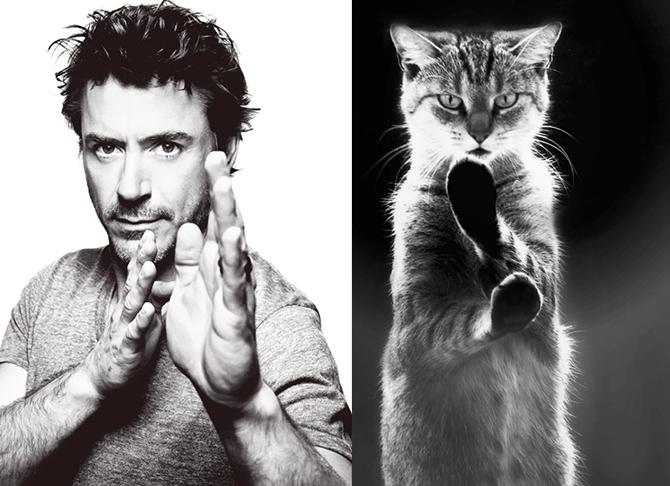 Мужчины & коты