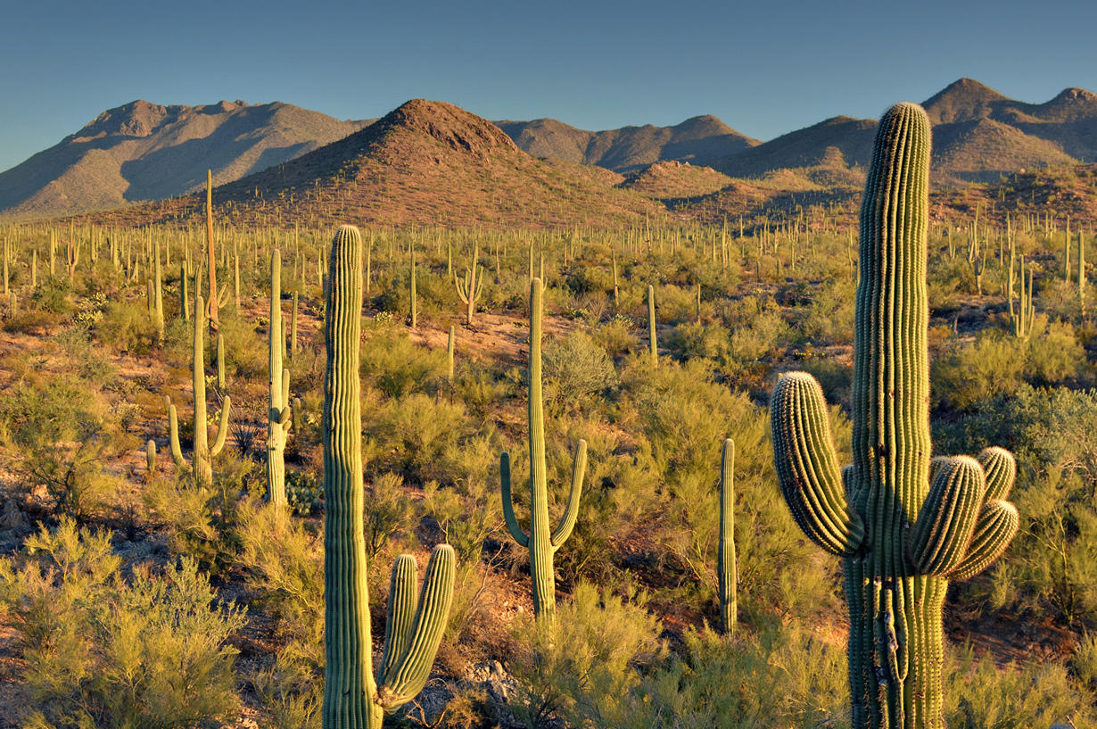 США. Аризона. Национальный парк Сагуаро. (Daniel Parks)