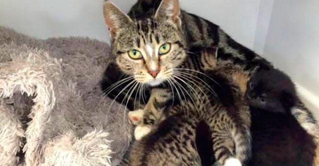 Кошка пришла в ветеринарную клинику, чтобы вернуть своих котят