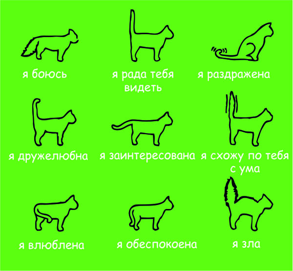 обозначение жестов кошки
