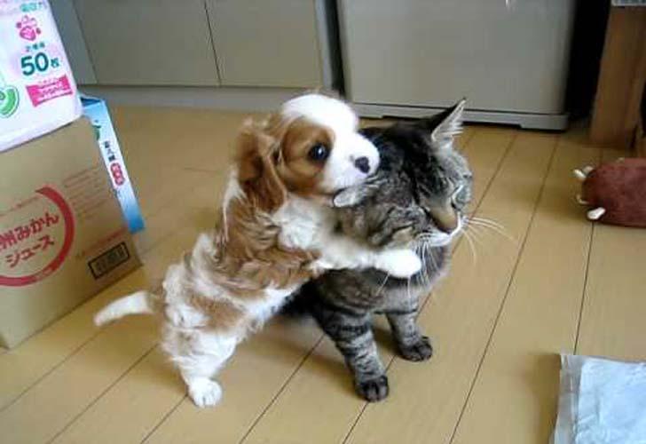 Кот на воспитании жизнерадостного щенка