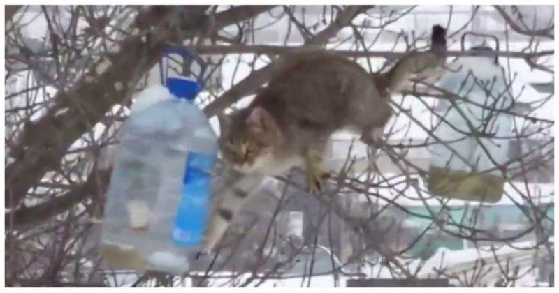 Голод не тетка! Кот ворует сало из кормушки для птиц (1 фото + 1 видео)