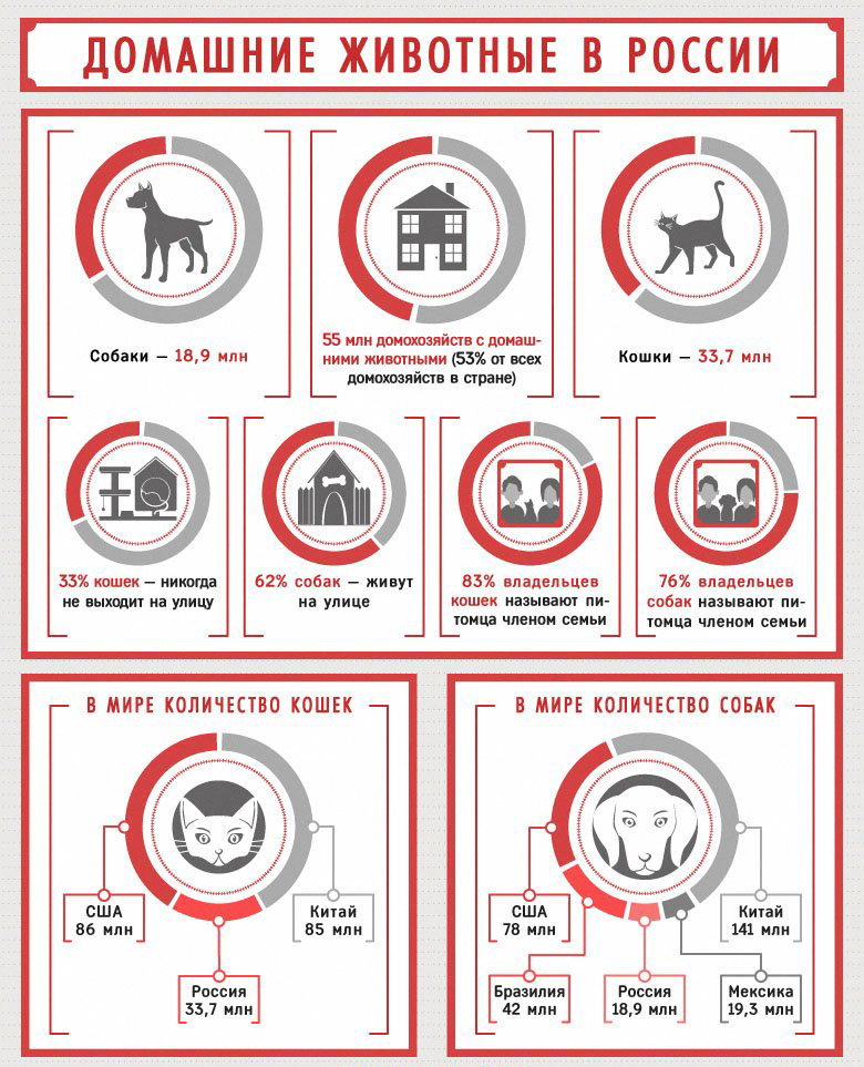 Домашние животные. Инфографика