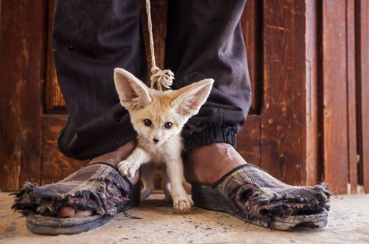 «Цена, которую они платят», Бруно Д 'Амичи Лучшие фотографии дикой природы 2014 года