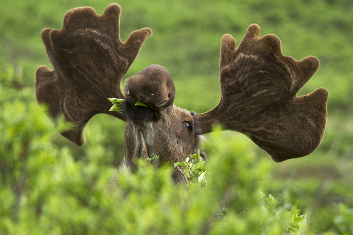 США. Аляска. Прогулка по Национальному парку Денали. (NPS/Jacob W. Frank)
