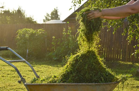 Ученые рассказали, почему скошенная трава так хорошо пахнет