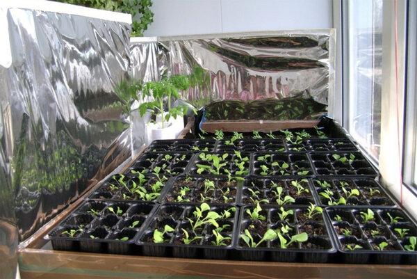 Как фольга помогает при выращивание здоровой рассады!?
