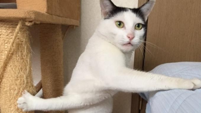 Смотрим на японскую кошку, застрявшую при попытке сделать два дела сразу