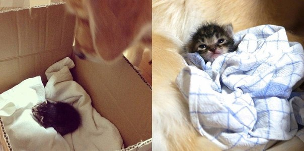 История о том, как подружились пес с котом
