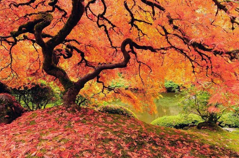 Могут ли деревья писать и какать?