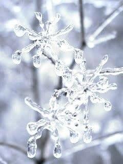 Зима - время пушистых снежинок, горячего чая и хороших книг...
