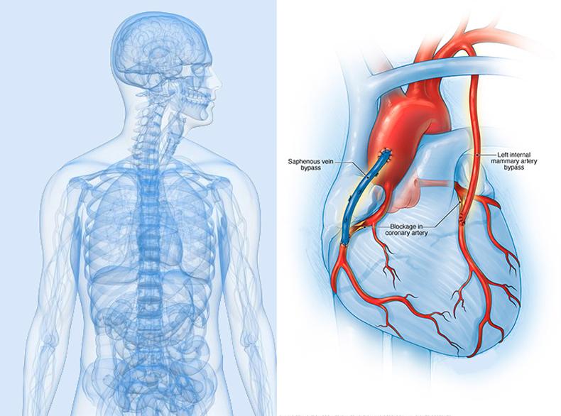 Упражнения для оздоровления сердца