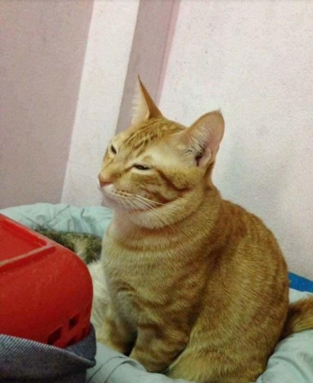 Кот покорил миллионы сердец, поддержав свою кошечку во время родов!