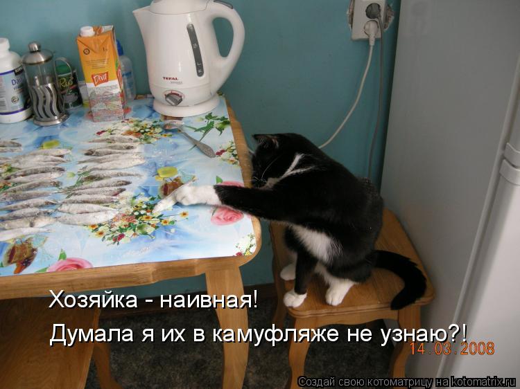 Котоматрица: Хозяйка - наивная! Думала я их в камуфляже не узнаю?!