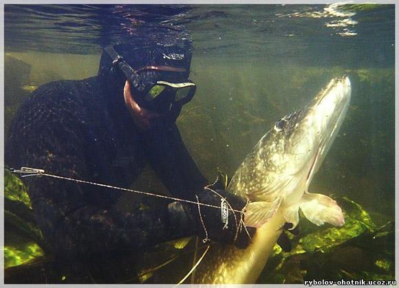 рыбалка с подводным ружьем видео