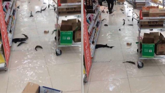 Рыба плавает по полу всего супермаркета! Необычное зрелище!