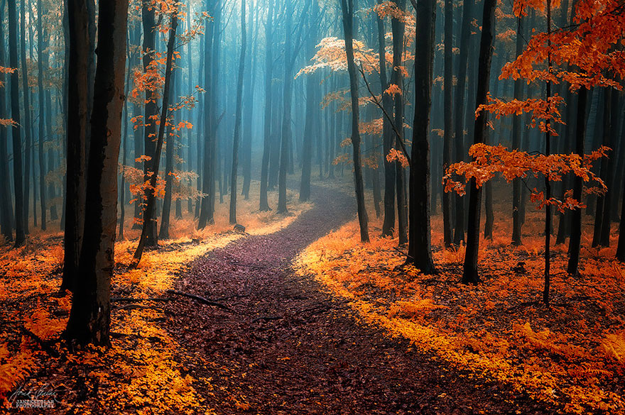 Магические тропинки, манящие на прогулку