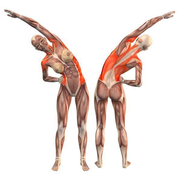 Лучшие упражнения для поясничной мышцы