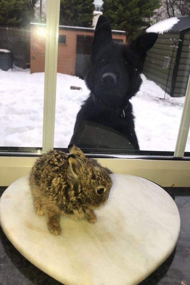 Замерзающего зайчонка спасли…