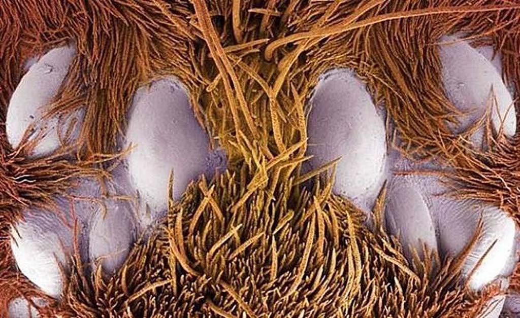 15udivitelnixsozdanii 13 15 удивительных созданий которых не разглядеть без микроскопа