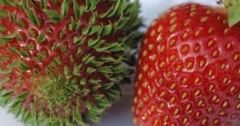 18 впечатляющих фотографий проросших фруктов, ягод и овощей